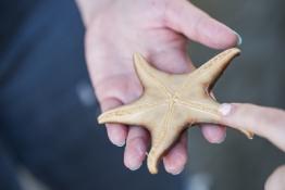 hand holding a beige starfish