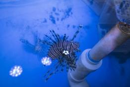 Marine lab blue tank with fish